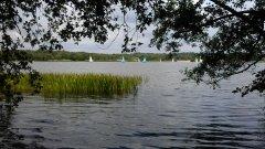 Frensham Great Pond - 20/07/2014